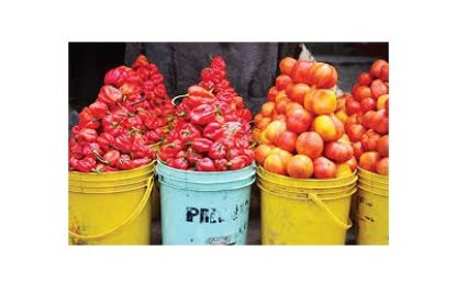 Osun govt supports tomato, pepper farmers with 2.2m naira grant